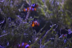 Animal. Nemo is looking at you guys royalty free stock photos