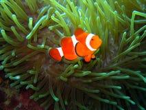 Nemo a trouvé Image stock