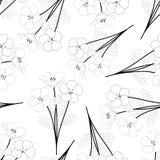 Nemophila浅蓝色注视在白色背景概述的花 也corel凹道例证向量 免版税库存照片