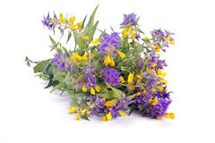 Nemorosum da flor a Ivan-Dinamarca-Marya ou do Melampyrum fotos de stock