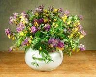Nemorosum Melampyrum 1 ζωή ακόμα Ανθοδέσμη των λουλουδιών λιβαδιών Στοκ Φωτογραφίες