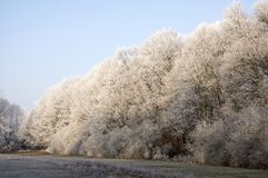 Nemosicka stran, hornbeam forest - interesting magic nature place in winter temperatures, frozen tree branches. Amazing winter scene, frozen branches, secret Stock Photography