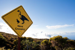 Nene Crossing sign. Stock Images