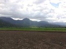 Nene, Hawaiian Goose in Taro Fields in Hanalei Valley on Kauai Island, Hawaii. Nene, Branta Sandvicensis, Hawaiian Goose in Taro Fields in Hanalei Valley on Royalty Free Stock Photography