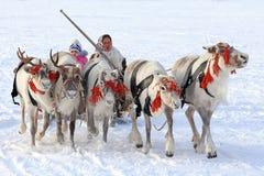Nenets妇女和孩子在鹿去 免版税库存照片