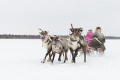 Nenets bergers de renne de jour à festival national «sur la péninsule de Yamal, Tarko-vente, le 28 mars 2015 Photos libres de droits