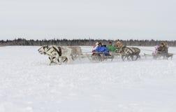 """Nenets en pastores en la península de Yamal, Tarko-venta del reno del día del festival nacional """", el 28 de marzo de 2015 Foto de archivo"""