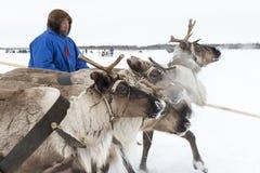 """Nenets för dagren på för den nationella festivalen """"Herders på den Yamal halvön, Tarko-Sale, 28 mars 2015 Arkivfoton"""