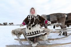 Nenets girl in the Northern Arctic of Russia. NADYM, RUSSIA - MARCH 04, 2018: Nenets girl in national dress sitting on a sled during the holiday of the reindeer Stock Image