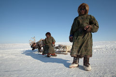 The Nenets man nad his son near deers Stock Images