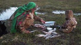 Nenets woman handles the fish. Tundra, the Yamal Peninsula. Summer in tundra stock footage