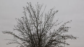 Nenhuma árvore da folha Fotos de Stock
