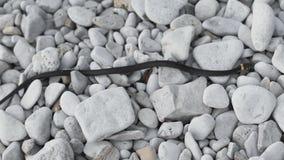 Nenhuma serpente venenosa rasteja nas rochas As serpentes são parte do sistema ecológico necessário para manter o equilíbrio E filme