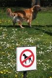 Nenhuns cães Imagens de Stock