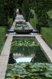 Nenuphar dans le jardin Image libre de droits