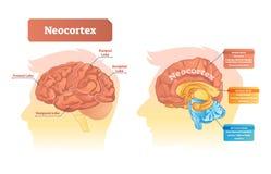 Neocortex vectorillustratie Geëtiketteerd diagram met plaats en functies vector illustratie