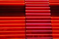 Neon Lizenzfreie Stockfotos