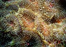Neon anemone Stock Photo