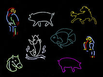 Neon Animal Signs Stock Image