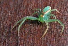 Neon Arachnid Royalty Free Stock Image