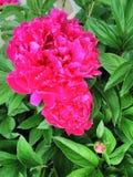 Neon botanical beauty royalty free stock photo