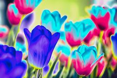 Neon abstract tulips. Fantastic colorful flowers, modern background. Neon bright abstract tulips. Fantastic colorful flowers, modern background royalty free stock images