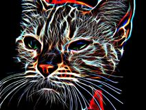 Neon cat on a black background Royalty Free Stock Images