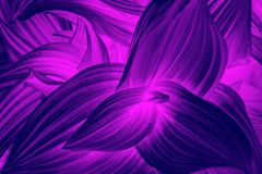 Neon curved leaves abstract texture. Natural background royalty free illustration