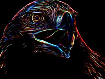 Neon eagle on black background. Closeup Stock Images