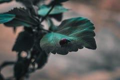 neon Ein rot-grüner Käfer kriecht entlang das Blatt der Anlage Stockbild