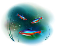 Neon fish Royalty Free Stock Photography