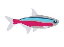 Neon fish. Vector illustration of tetra fish Royalty Free Stock Image