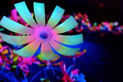 Neon. Flower colors pink blue green black high contrast controlled light indoor art garden plastic Stock Photos