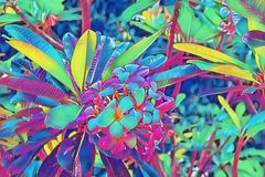 Neon frangipani flower in leaf. Plumeria blossom psychedelic digital illustration. Blooming tropical bush. royalty free stock photos
