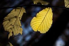 Neon Glow Leaf at Linderhof Castle - Ettal, Germany Royalty Free Stock Image
