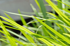 Neon green grass blowing in wind background Royalty Free Stock Photos