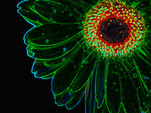Neon Growed from Flower. Neon flower stock photography
