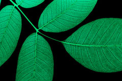 Neon leaves Royalty Free Stock Image