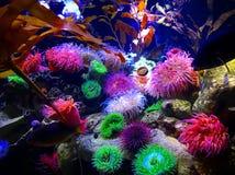 Neon på havet royaltyfria bilder