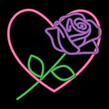Neon Purple Rose in a Neon Pink Heart Stock Photo