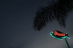 Neon Sign With Palm Tree Stock Images