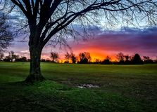 Neon sunrise with tree silhouette. Neon sunrise over a park with tree silhouette. Photo of Durdam Downs, Bristol, UK. Taken in 2017 Royalty Free Stock Photos