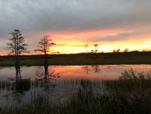 swamp sunsets in the marsh with ripples in the water royalty free stock photography