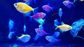 Neon Tropical Fish Royalty Free Stock Images