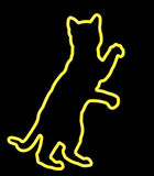 Neon Yellow Cat Standing. A neon yellow cat standing playfully Royalty Free Stock Photography