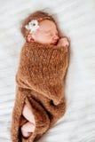 Neonata appena nata Immagine Stock