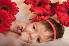 Neonata con i fiori rossi Fotografie Stock