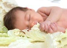 Neonata del bambino dell'infante neonato che si trova e che dorme nel cavolo le Immagini Stock