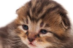 Neonate kitten Stock Images