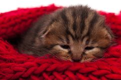 Neonate kitten Stock Photos